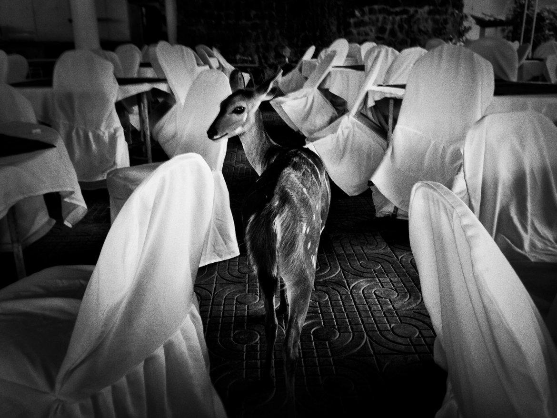 Zwart-wit-fotografie