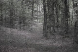 Helen Arenz - Forestscapes Grey_