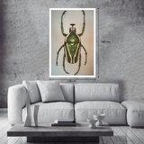 Alex van der Lecq - Bugs_