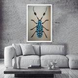 Alex van der Lecq - Bugs Blue_
