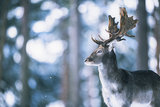 Ysbrand Cosijn - Winter shades_