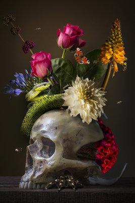 Sander van Laar - Royal Skull