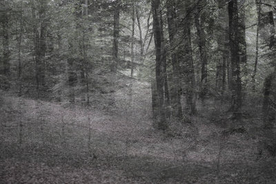 Helen Arenz - Forestscapes Grey
