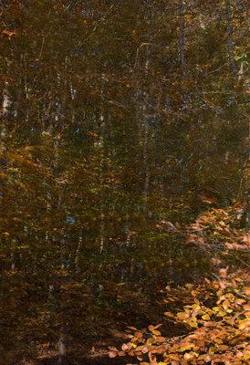 Helen Arenz - Forestscapes Orange