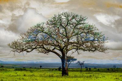 Alex van der Lecq - Tree Spring