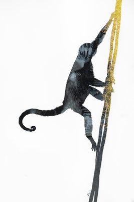 Alex van der Lecq - Me and my Monkey