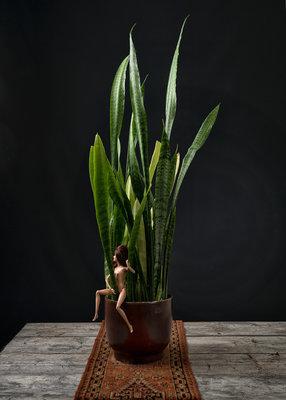 Ursula van de Bunte - Barb Erotics Plant