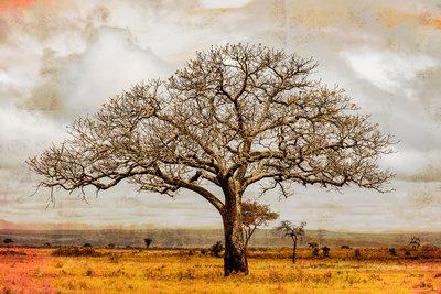 Alex van der Lecq - Tree Autumn