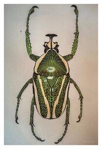 Alex van der Lecq - Bugs