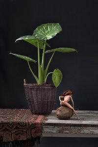 Ursula van de Bunte - Barb Erotics Coconut