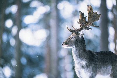 Ysbrand Cosijn - Winter shades